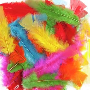 Feathers: Assorted - Choice of Assortments