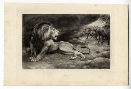 1898 LION & HYENAS By Edmund Caldwell - Antique Print from Photogravure (1)